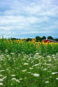 Farmland Flowerscape New Jersey