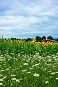 Farmland Flowerscape New Jersey