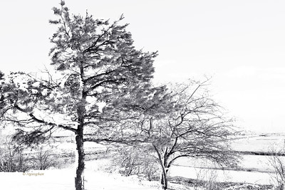 Winter Trees in NJ Meadowlands