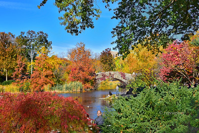 NYC Central Park Color Feast