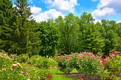 Rose Garden Brookdale Park NJ