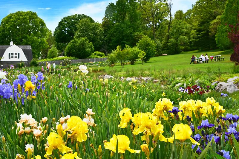 Presby Memorial Iris Garden