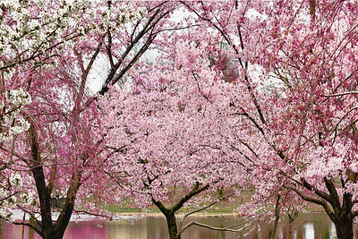 Simply Spring in Pink and Green
