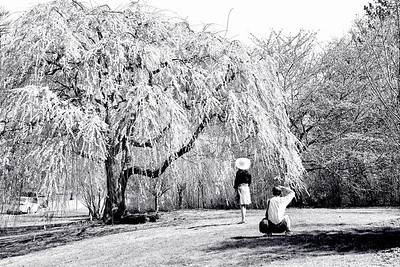 Photos under the Cherry Tree