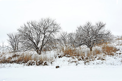April Snow - NJ Meadowlands #7
