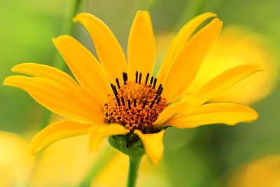Woodland Sunflower Portrait 2