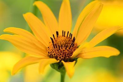 Woodland Sunflower Portrait