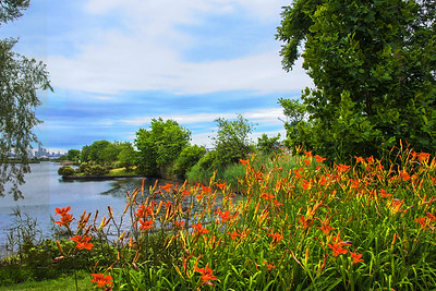 Daylilies and Marsh -NJ Meadowlands