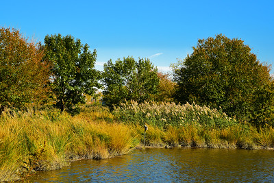 NJ Meadowlands Fall Landscape