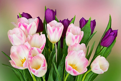 Tulip Bouquet in Pinks and Green