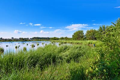 Summer Zen-Mill Creek Marsh NJ