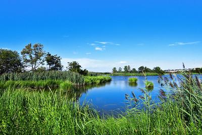 Summer Serenity-Mill Creek Marsh NJ