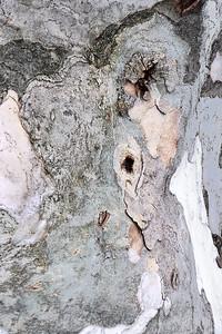 Tree Art Abstract