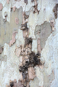 Nature's Winter Tree Abstract I