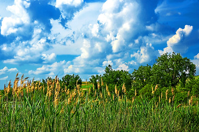 NJ Wetlands Blue Sky over Spring Green