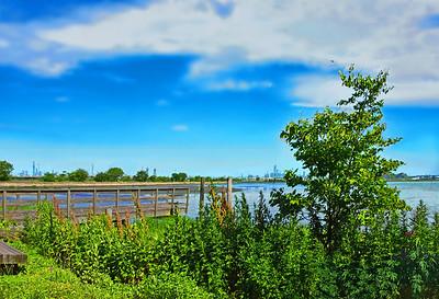 NJ Summer Wetlands Walk