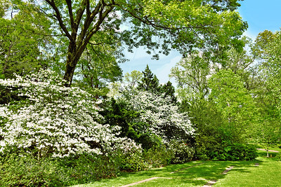 Spring Greens and White Dogwood Blooms