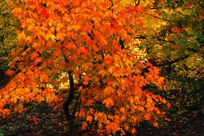 Sunlight in Autumn Woods
