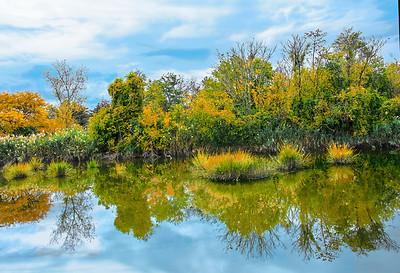NJ Meadowlands Autumn Meditation