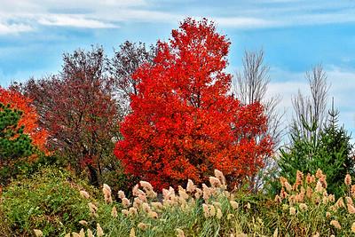 Autumn Finale Mill Creek NJ