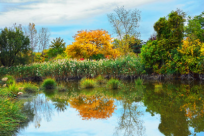 NJ Marsh Autumn Foliage Reflections