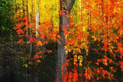 Autumn Woodland Foliage