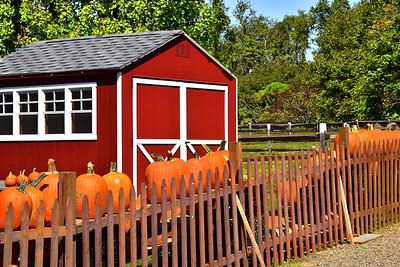 Pumpkin Time on the Farm