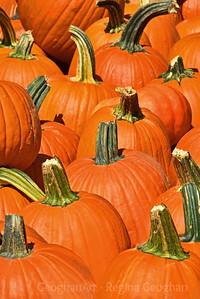 Farm Pumpkins on Display