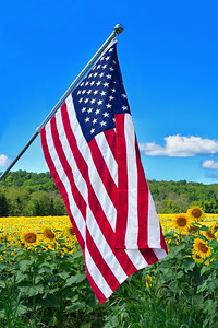 American Flag and Sunflowers