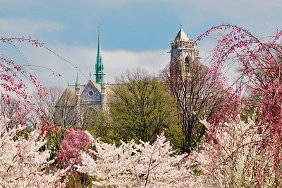 Day 109: Cathedral Basilica of the Sacred Heart - April 19.  This French-Gothic style cathedral in Newark, N.J. is the fifth largest cathedral in North America.  According to Wikipedia, construction began in 1899 and was completed in 1954.  Thiis photo was taken from Branch Brook Park with the cherry blossoms in the foreground.  HAPPY EASTER WEEKEND.