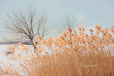 Day 051: Phragmites in Snow- February 20. Nice to see a little blue sky with all of the dreary weather we've been having.