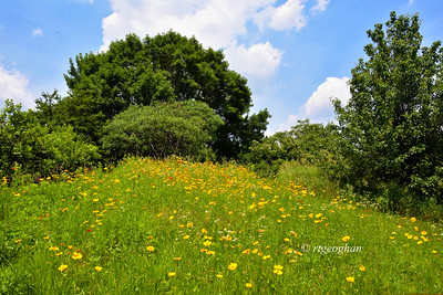 Day 169: Blue Skies and Wildflowers - June 18.  A pretty combination yesterday at DeKorte Park in the New Jersey Meadowlands.