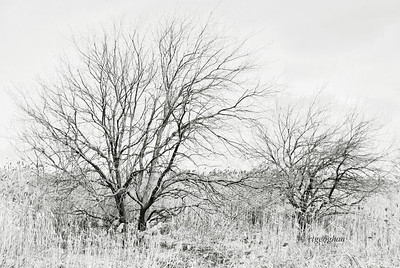 Day 073: Winter Trees and Branches Black and White - March 14.  Tree branches  and marsh grasses on a dreary, bitterly cold and windy day.  As shot but converted to black and white with Nik Silver Efex.