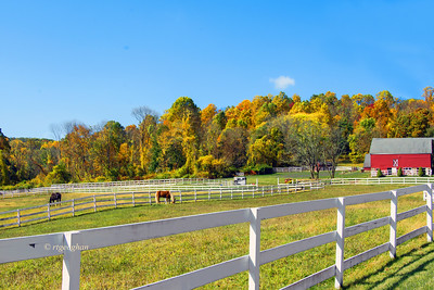 Day 286: Horse Farm and Autumn Foliage N.J. - Oct 18. Horses grazing on a beautiful fall afternoon with fall foliage in the background
