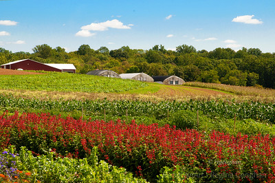 Day 243: NJ Farm - August 30.  A perfect day yesterday for a noontime visit to one of NW New Jerseys 'pick your own' farm.   Thanks to all who posted the wonderful comments on my butterfly image yesterday.