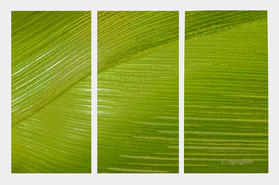 Day 198: Nature Abstract in Green - July 16.  Sometimes it is fun to look at things from a different perspective.  I was drawn to the shades of green and the lines in this item.  Any guesses what it is?