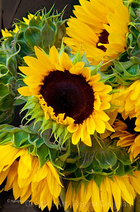 Day 122: Sunflowers for Sale - May 1, 2012.