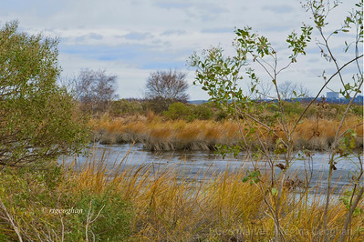 Day 331: Mill Creek Marsh NJ Meadowlands - Nov 25.  Thank you very much to all who commented on my skyline images in the past few days.  Spent a few hours this morning, along with a wonderful group of volunteers who braved very cold and windy weather, to help clean up debris in this park so that it can be reopened to the public.   It took 4 days for workers with heavy duty equipment to clear the trails of fallen trees and take down broken branches.  Today, was spent clearing other kinds of debris that was carried onto the ground by storm waters.  Hopefully, this park will open this week.  Other parks in the Meadowlands may not be able to open until after the spring due to severe damage.