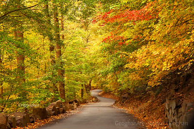 Day 300: Palisades Interstate Park NJ - Oct 26.  Yesterday was yet another cloudy, overcast day.  Nice, though, to view and photograph the colorful foliage in the woods. With the threat of a big storm coming, only another day or two and the autumn display will be gone.