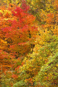 Day 299: Autumn Mosiac - Oct 25.  Beautiful autumn foliage colors along the NJ Palisades.