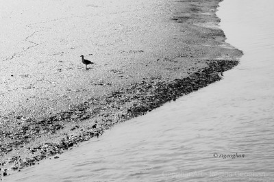 Day 259: Gull at Low Tide - Sept 15.    The hot sunlight and a lone gull at low tide created this monocromatic photo opportunity in the NJ Meadowlands. .