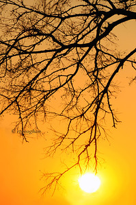 Day 337: Tree Branches and Sun at Sundown - December 4.