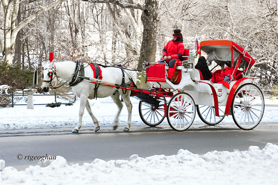 Day 353: Central Park Carriage Ride NYC - December  20.