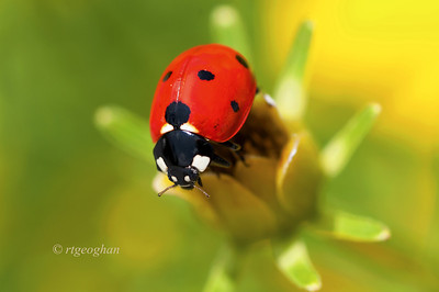 Day 202: Lady Bug - July 24. Thanks for all of the comments on my butterfly post yesterday.