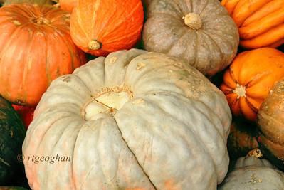 Day 317: Pumpkin Display- November 14.