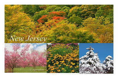 "Day 286: New Jersey-Four Seasons- October 13.  Well ""N"" day created a dilemma for me.  NJ is my home state, yet NYCity is practically my backyard.  So I posted and ""N"" photo for each state today.   The top image in this photo was taken during this week - my first fall foliage photos for this year."