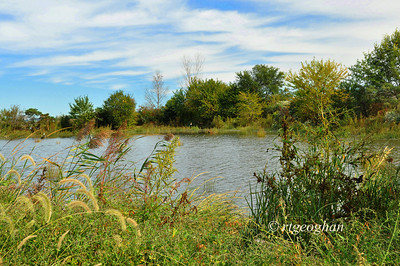 Day 281: Mill Creek Marsh - October 9.  A beautiful day yesterday for a lunchtime walk.  Rain and heavy winds expected beginning later today for a few days.