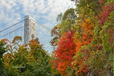 Day 296: George Washington Bridge Fall Foliage - October 23.   Started out late afternoon yesterday to look for my photo for the day - rain began shortly after.  But I continued to my destination wanting to get more fall foliage photos.  As I was finishing up and on my way to start home - just before sundown - the sun came out and I was lucky to be in a spot to get this shot.
