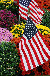 Day 253: Flowers and Flags - September 14.  Spotted this burst of color as I was driving in a neighboring town and decided to backtrack to check it out.  It was a circular path of newly planted mum with flags interspersed between the plants around a lovely 9/11 memorial spot.