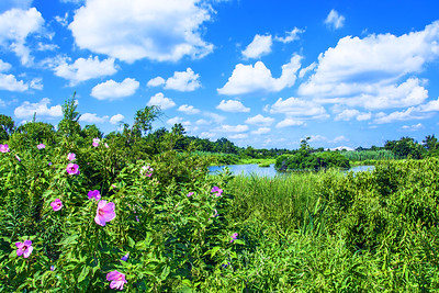 Wetlands Summer Beauty
